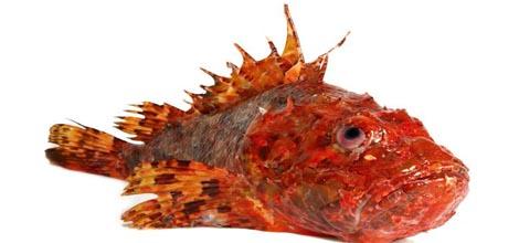 productos Pescados