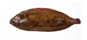 lenguadodesta