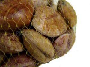 chocharubiatienda